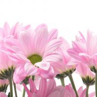 1082 Розовая мелодия