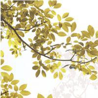 1092 Золотая листва