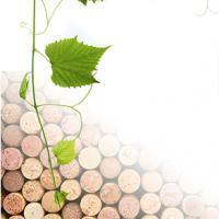 2004 Пробковый виноград