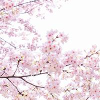 3084 Розовый сон