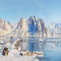2043 Арктика