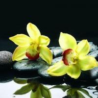 2062 Орхидеи